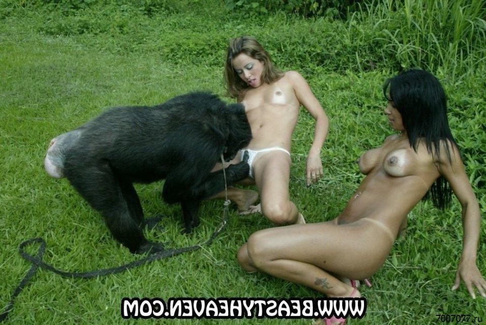 Секс Девушки С Обезьяной