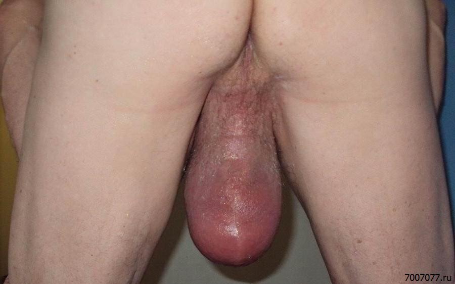 Яички После Секса